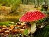 Contes i més contes: Dins del bosc