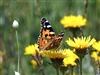 Curs online per aprendre a identificar papallones